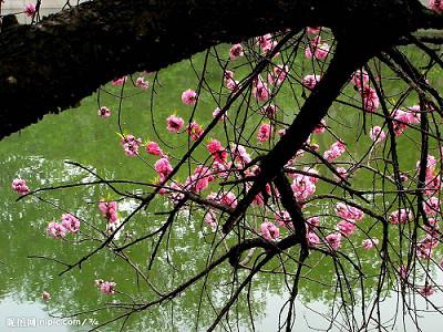 的成语描写春天美景的成语春天的成语四字成语