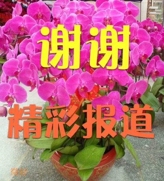 image.jpg.thumb (9).jpg
