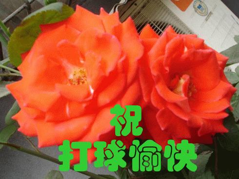 37_png_thumb_jpg_thumb打球愉快.png.thumb[1].png.thumb.jpg